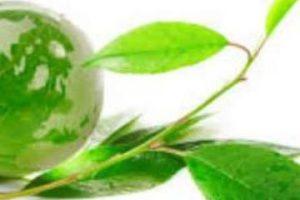 εικόνα σφαίρα με πράινη τη γη και πράσινο κλαδί